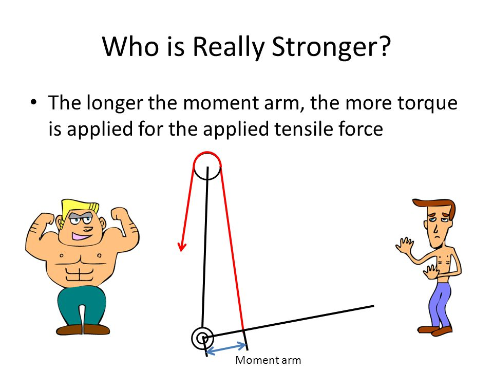 Who is Really Stronger The longer the moment arm, the more torque is applied for the applied tensile force.