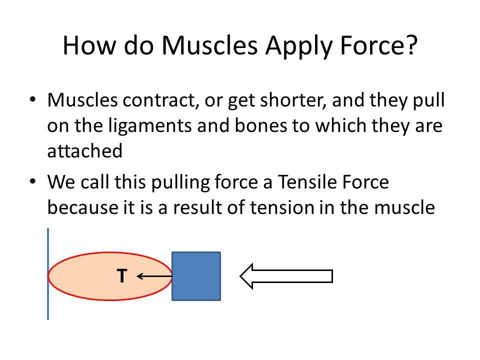 How do Muscles Apply Force