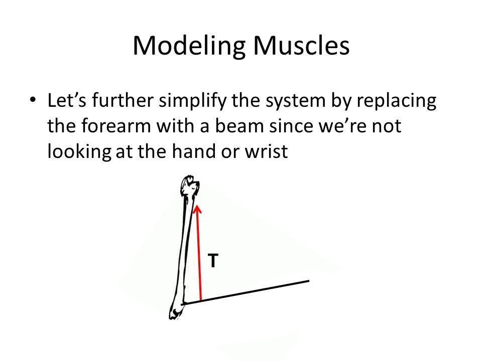 Modeling Muscles Let's further simplify the system by replacing the forearm with a beam since we're not looking at the hand or wrist.