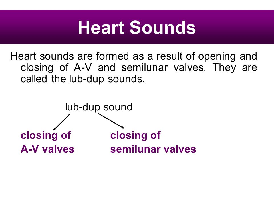 Heart Sounds Heart sounds are formed as a result of opening and closing of A-V and semilunar valves. They are called the lub-dup sounds.