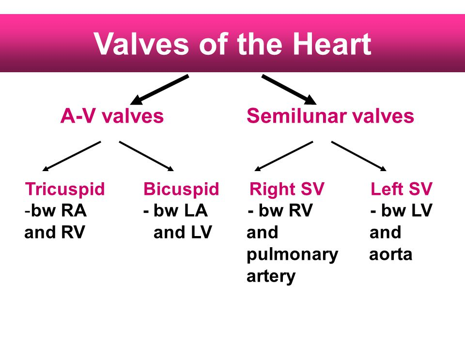 Tricuspid Bicuspid Right SV Left SV