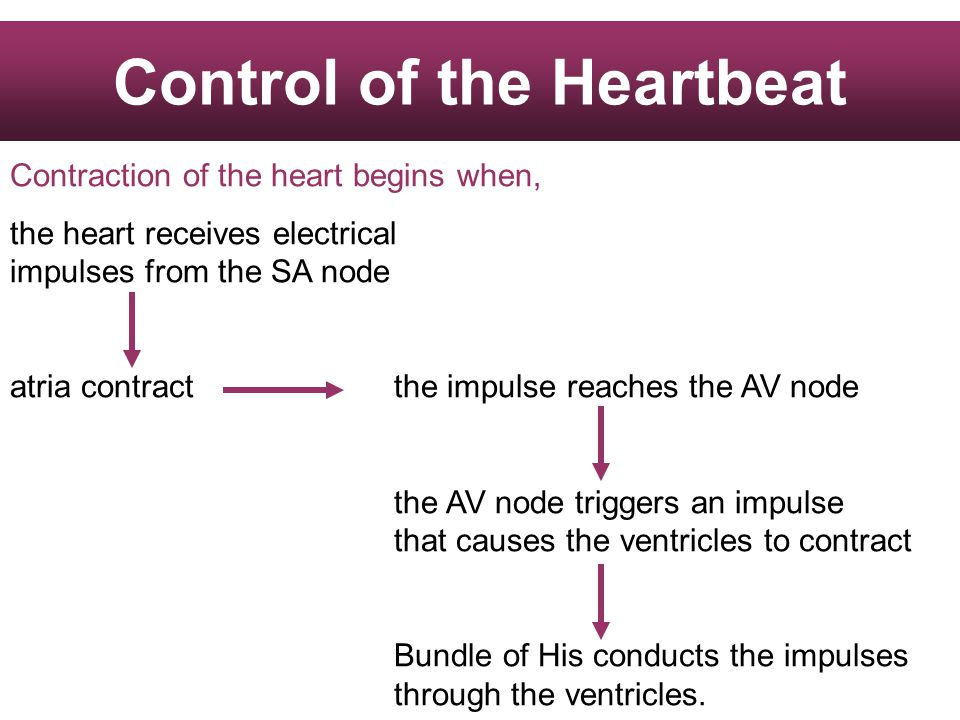 Control of the Heartbeat