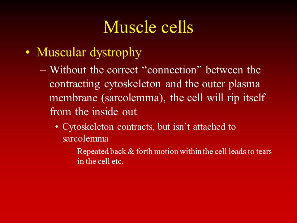 Muscle cells Muscular dystrophy