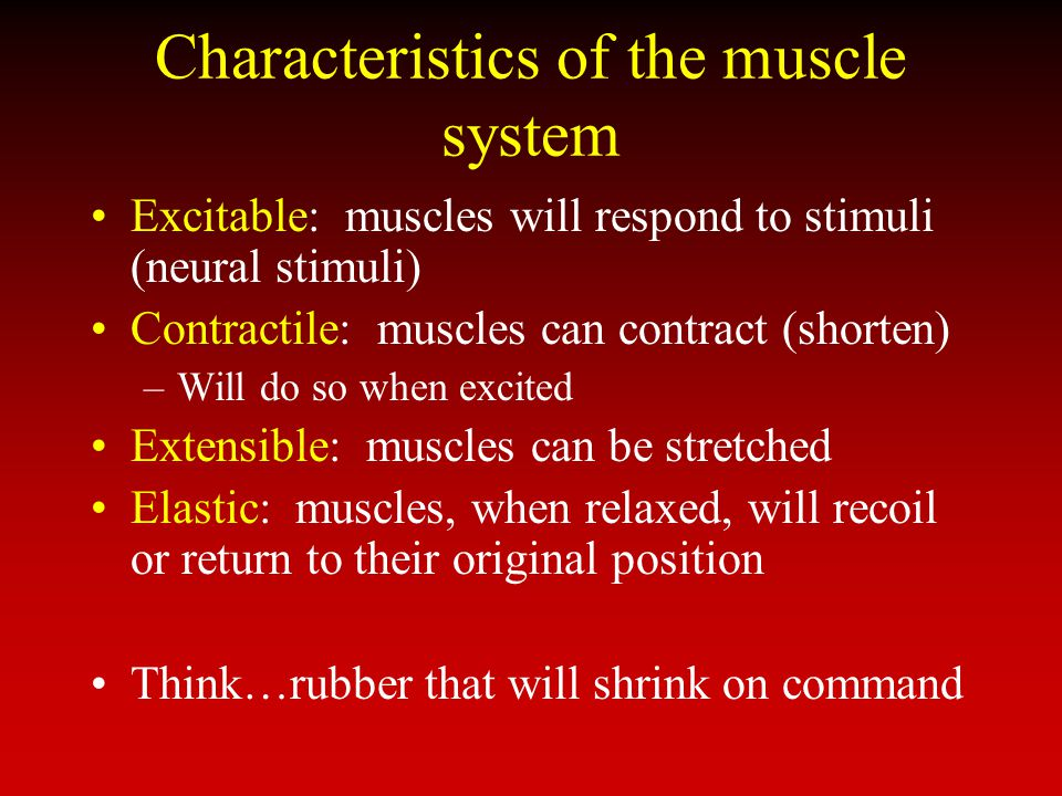 Characteristics of the muscle system