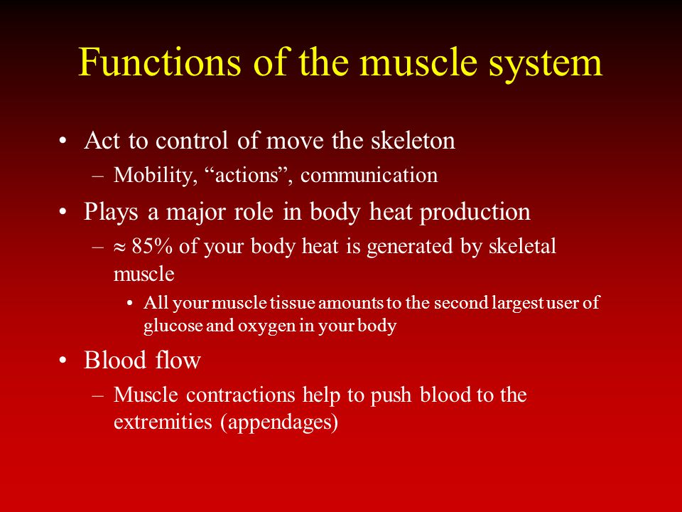Functions of the muscle system