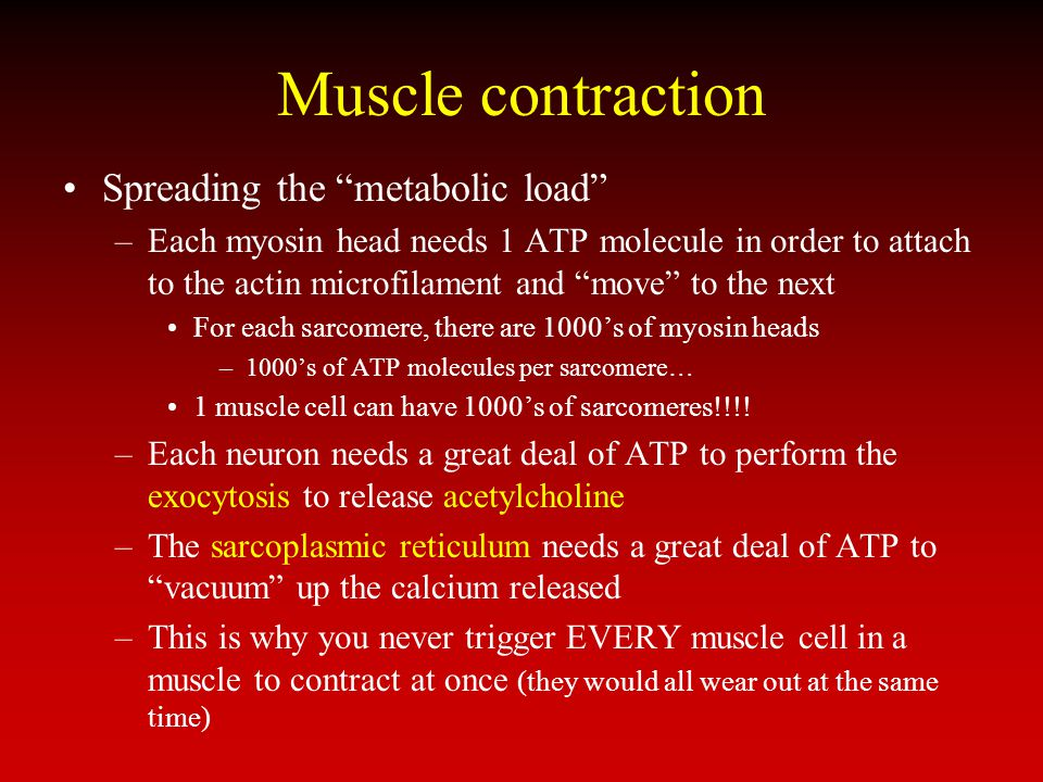 Muscle contraction Spreading the metabolic load