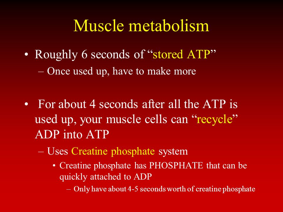Muscle metabolism Roughly 6 seconds of stored ATP