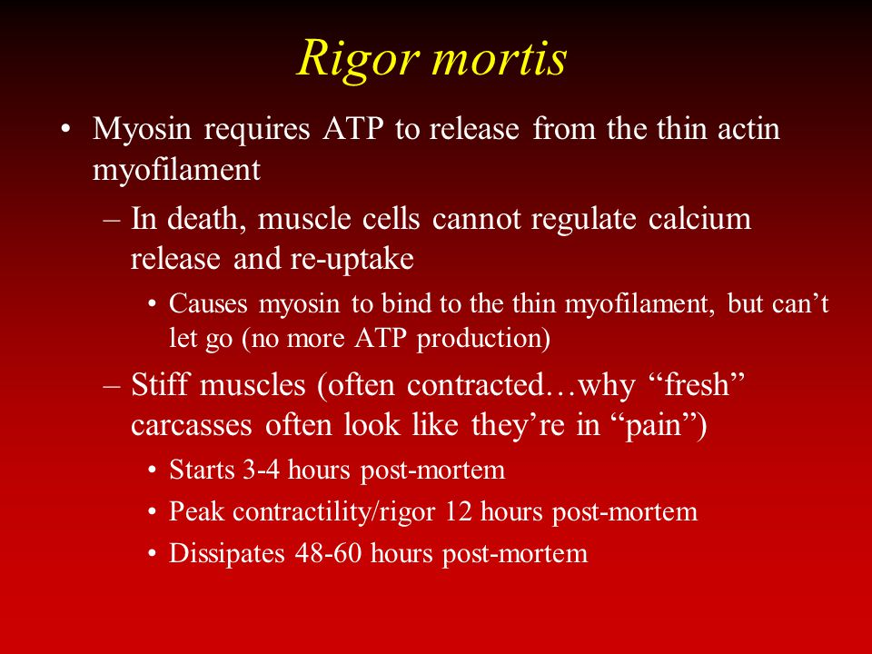 Rigor mortis Myosin requires ATP to release from the thin actin myofilament. In death, muscle cells cannot regulate calcium release and re-uptake.