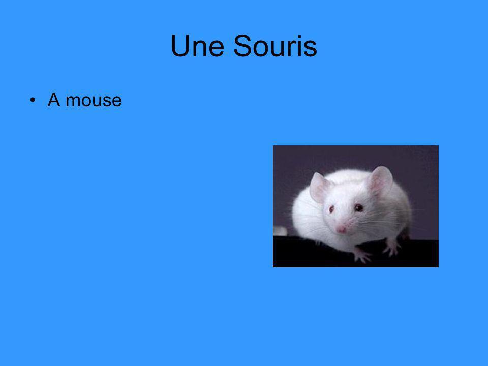 Une Souris A mouse