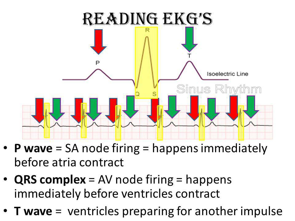 Reading EKG's P wave = SA node firing = happens immediately before atria contract.