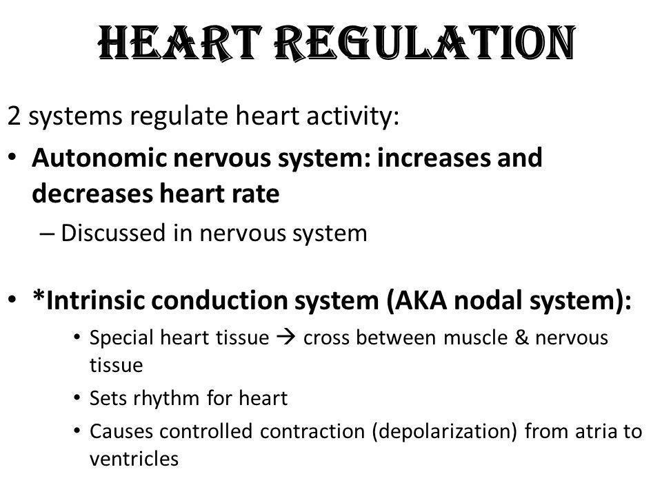 Heart Regulation 2 systems regulate heart activity: