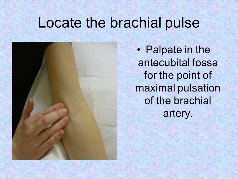 Locate the brachial pulse