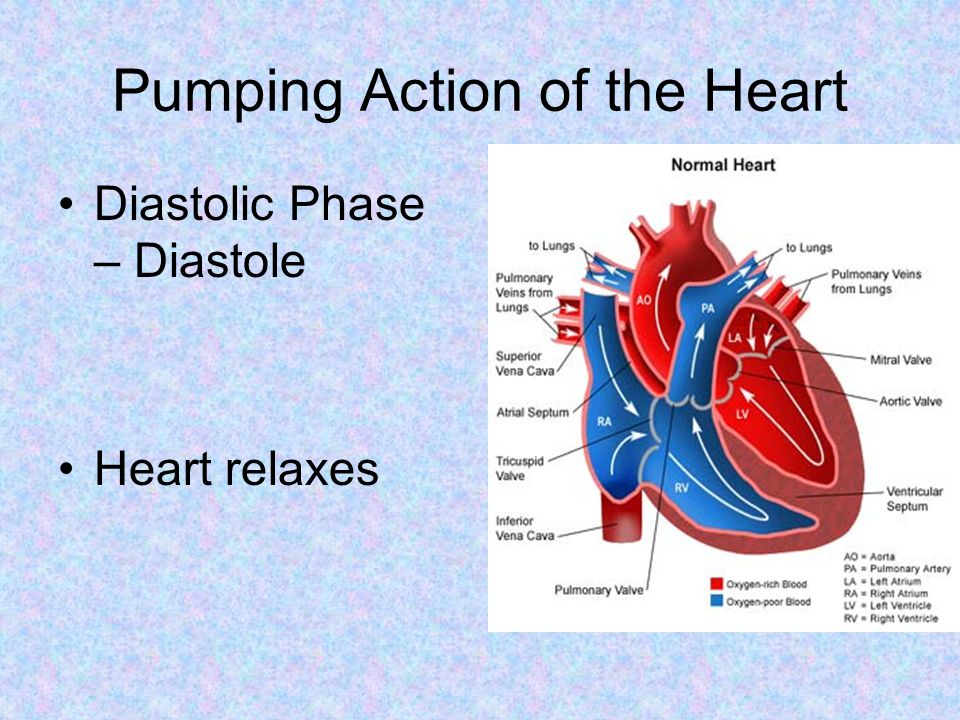 Pumping Action of the Heart