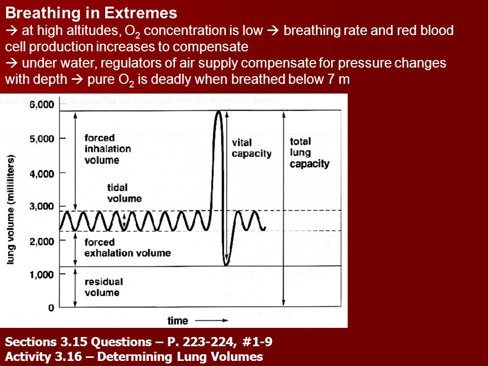 Breathing in Extremes  at high altitudes, O2 concentration is low  breathing rate and red blood cell production increases to compensate.