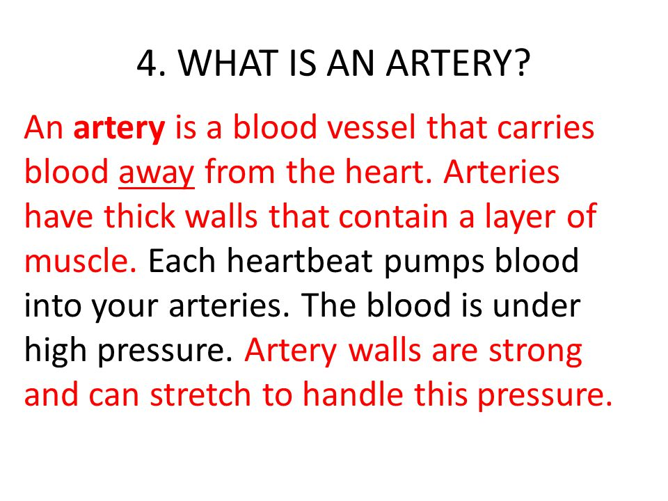 4. WHAT IS AN ARTERY