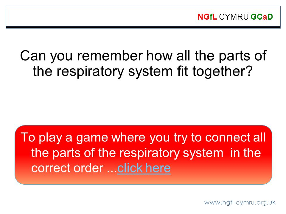 Can you remember how all the parts of the respiratory system fit together