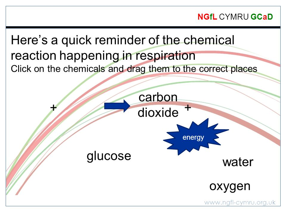 Here's a quick reminder of the chemical reaction happening in respiration Click on the chemicals and drag them to the correct places