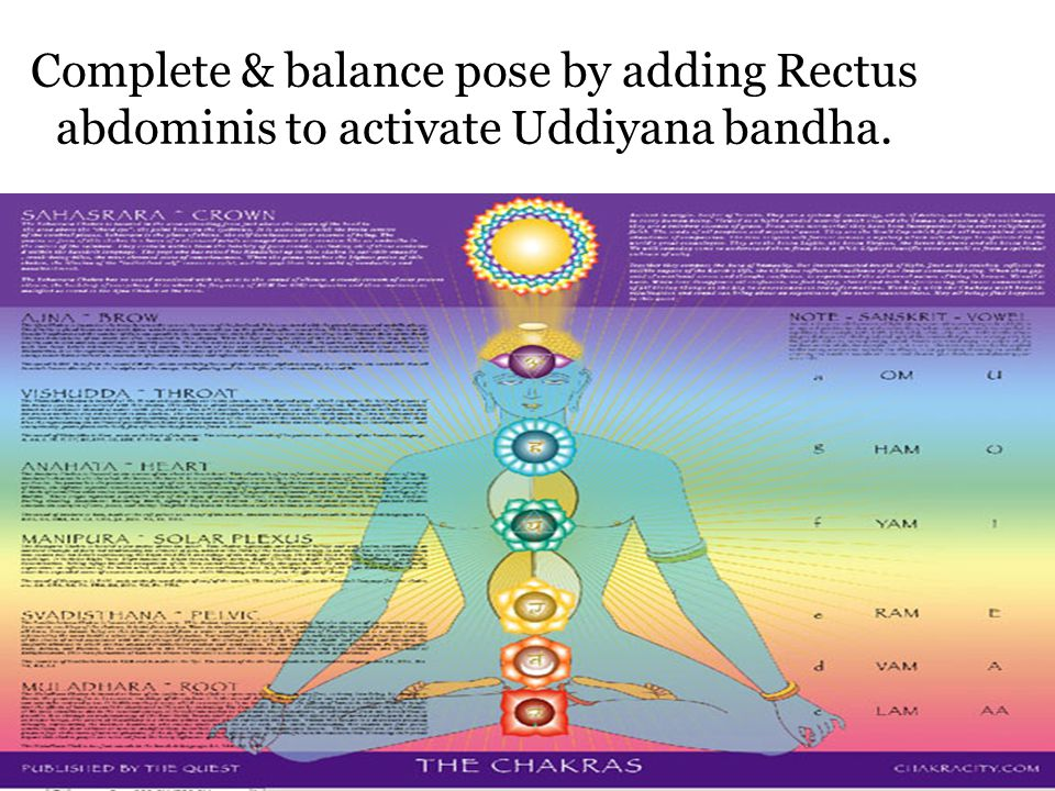 Complete & balance pose by adding Rectus abdominis to activate Uddiyana bandha.