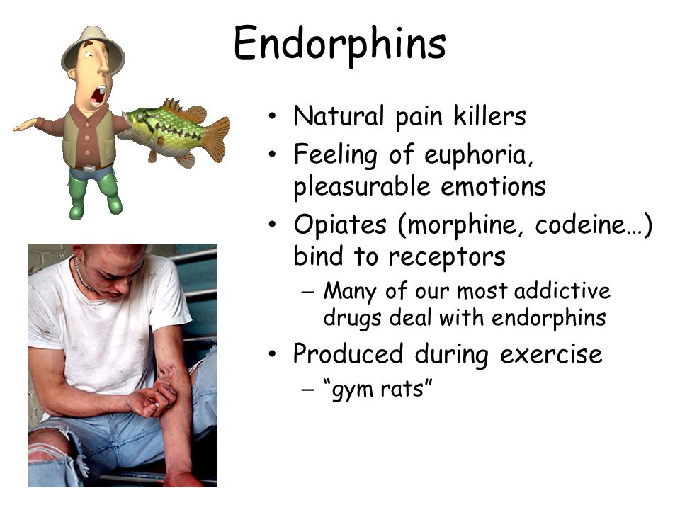 Endorphins Natural pain killers