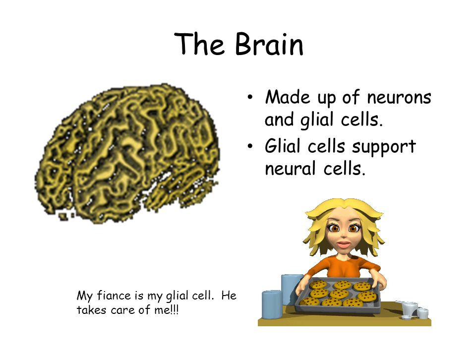 The Brain Made up of neurons and glial cells.