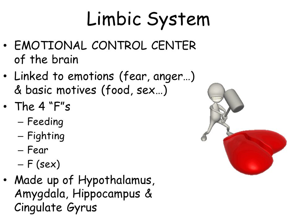 Limbic System EMOTIONAL CONTROL CENTER of the brain