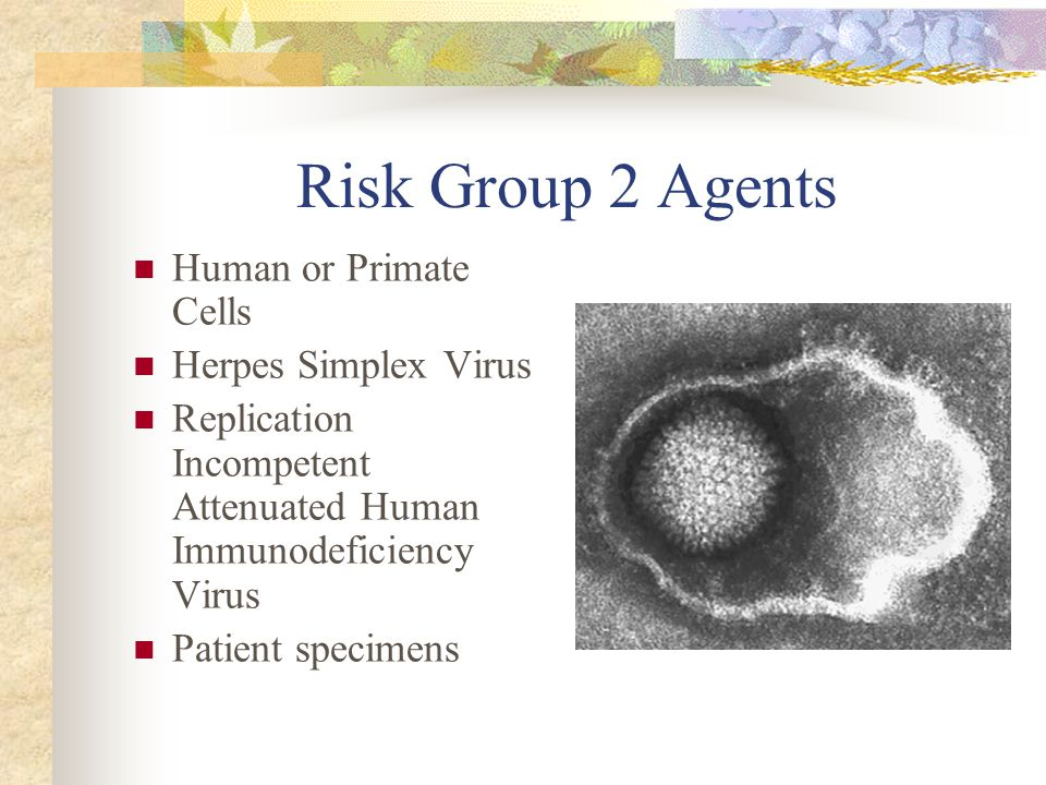 Risk Group 2 Agents Human or Primate Cells Herpes Simplex Virus
