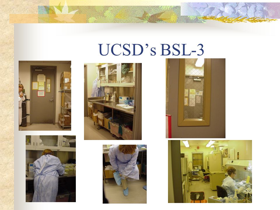 UCSD's BSL-3