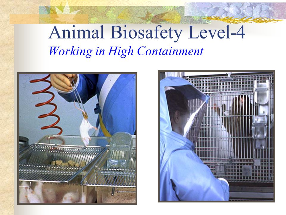 Animal Biosafety Level-4 Working in High Containment