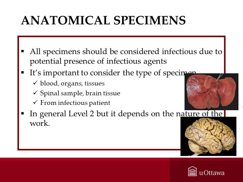 ANATOMICAL SPECIMENS All specimens should be considered infectious due to potential presence of infectious agents.