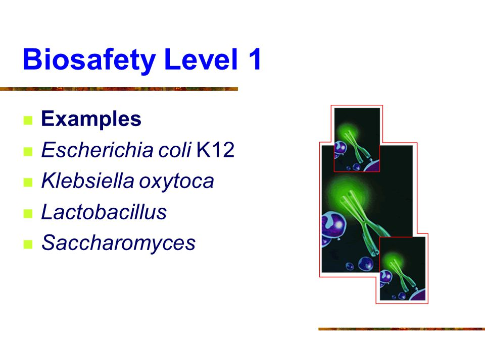 Biosafety Level 1 Examples Escherichia coli K12 Klebsiella oxytoca