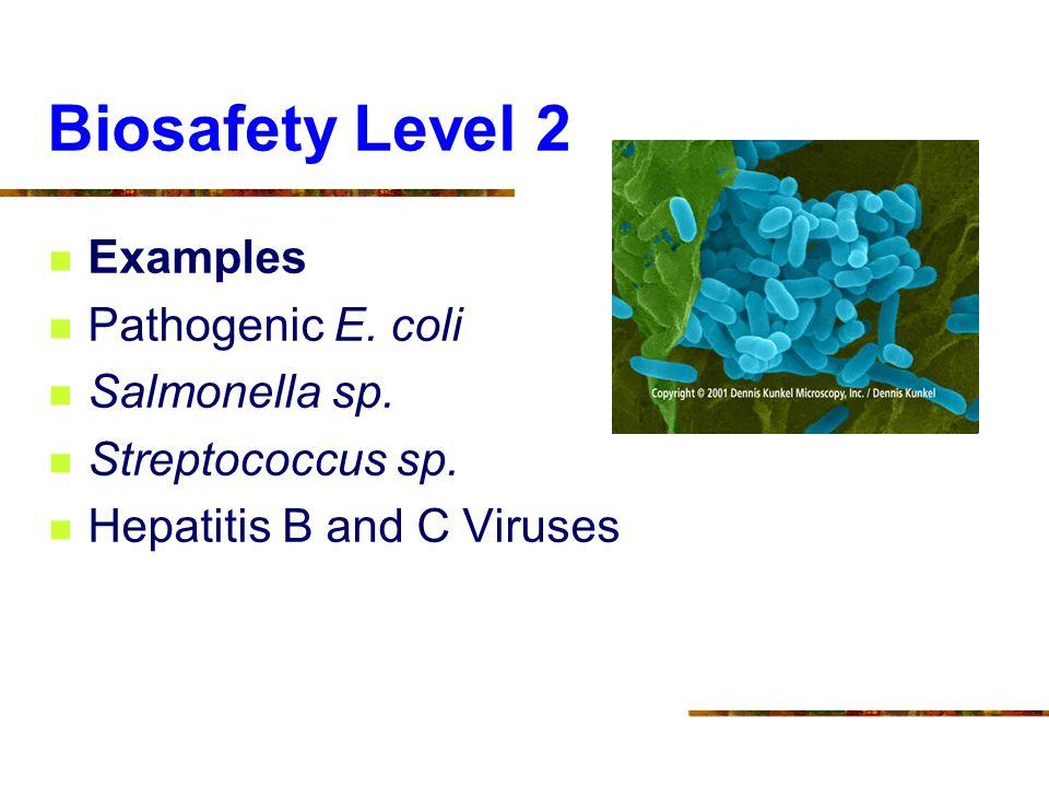 Biosafety Level 2 Examples Pathogenic E. coli Salmonella sp.