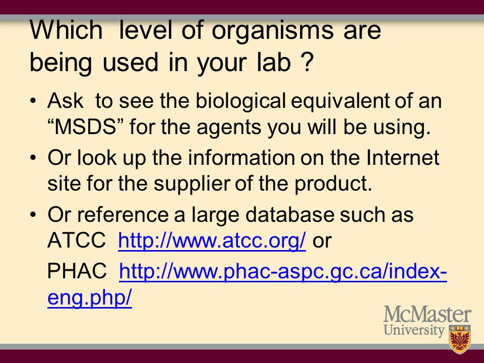 Which level of organisms are being used in your lab