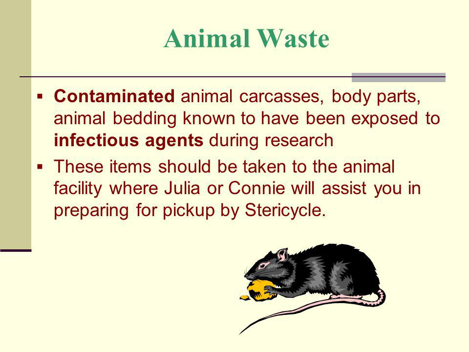 Animal Waste Contaminated animal carcasses, body parts, animal bedding known to have been exposed to infectious agents during research.