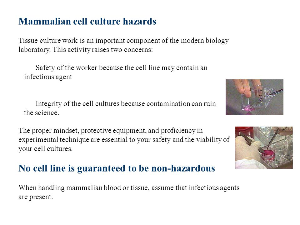 Mammalian cell culture hazards Tissue culture work is an important component of the modern biology laboratory.