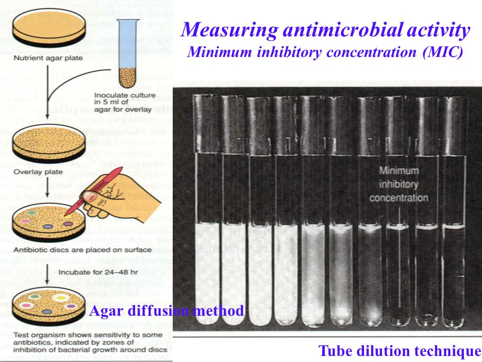 Measuring antimicrobial activity Minimum inhibitory concentration (MIC)