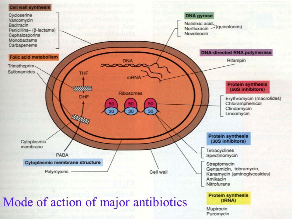 Mode of action of major antibiotics