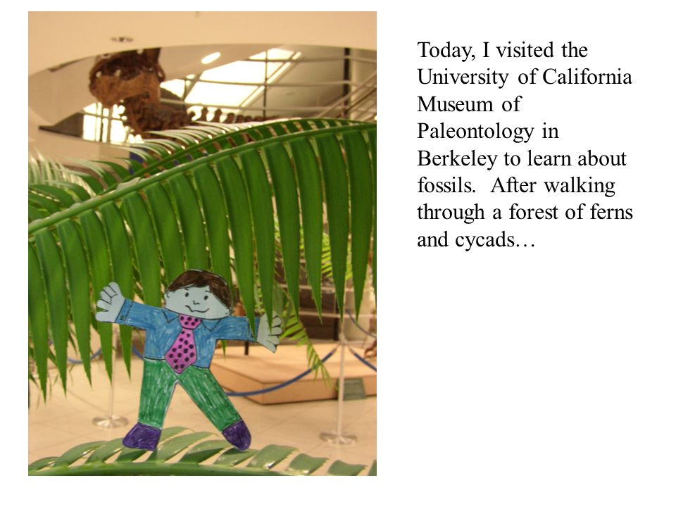 Today, I visited the University of California Museum of Paleontology in Berkeley to learn about fossils.