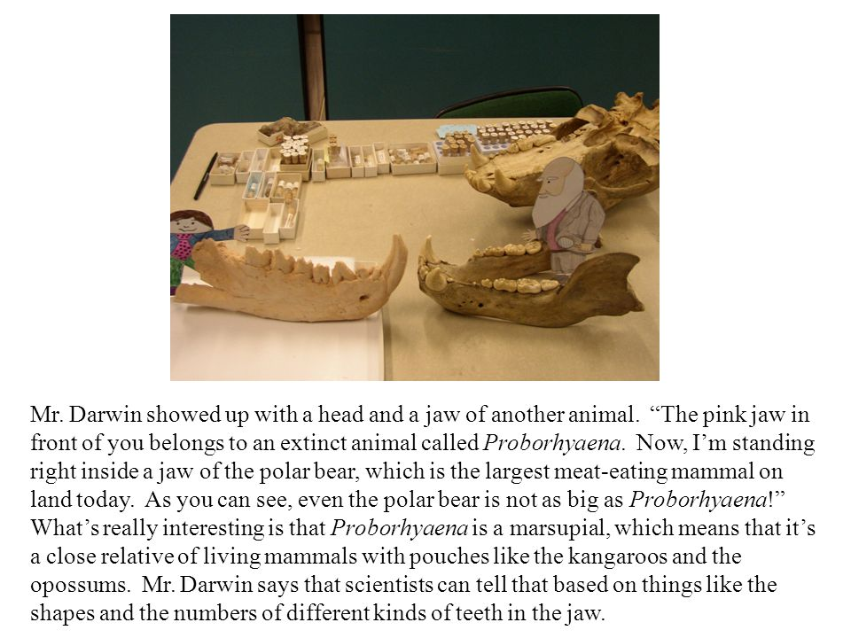 Mr. Darwin showed up with a head and a jaw of another animal