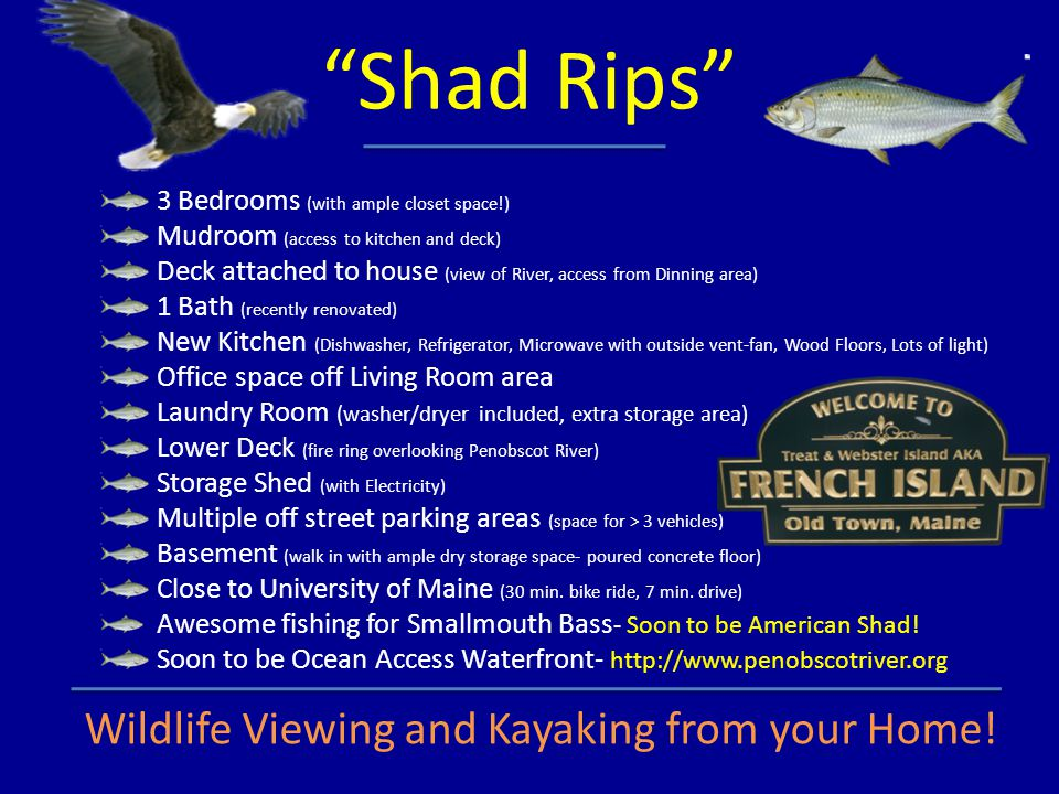 Shad Rips Wildlife Viewing and Kayaking from your Home!