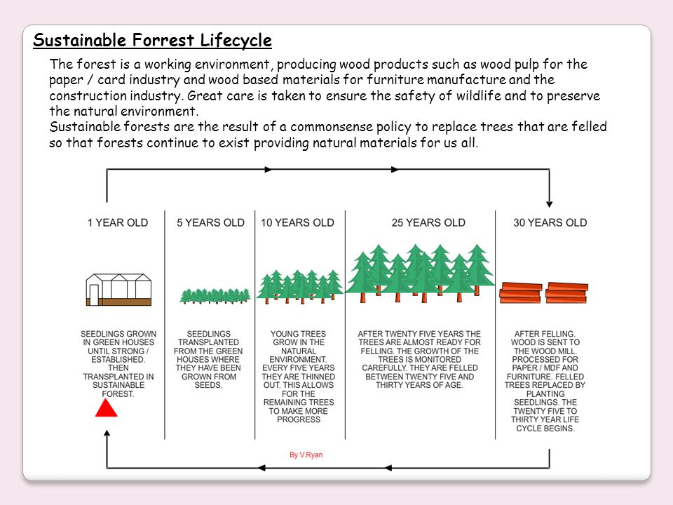 Sustainable Forrest Lifecycle