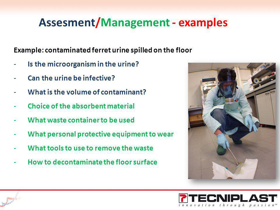 Assesment/Management - examples