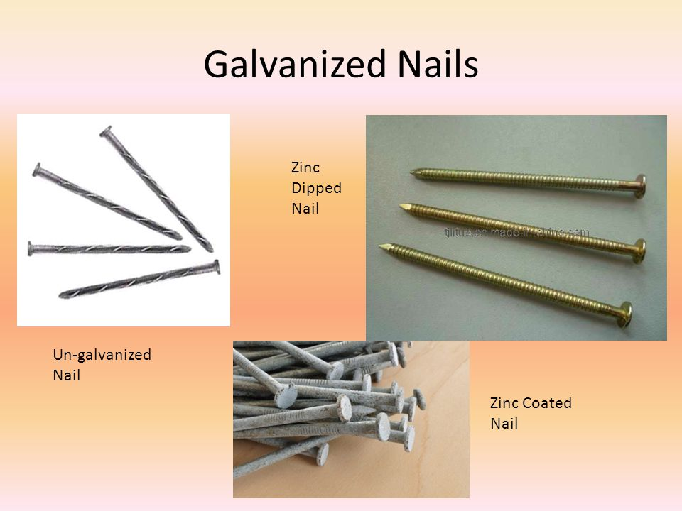 Galvanized Nails Zinc Dipped Nail Un-galvanized Nail Zinc Coated Nail