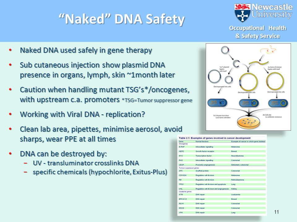 Naked DNA Safety Naked DNA used safely in gene therapy