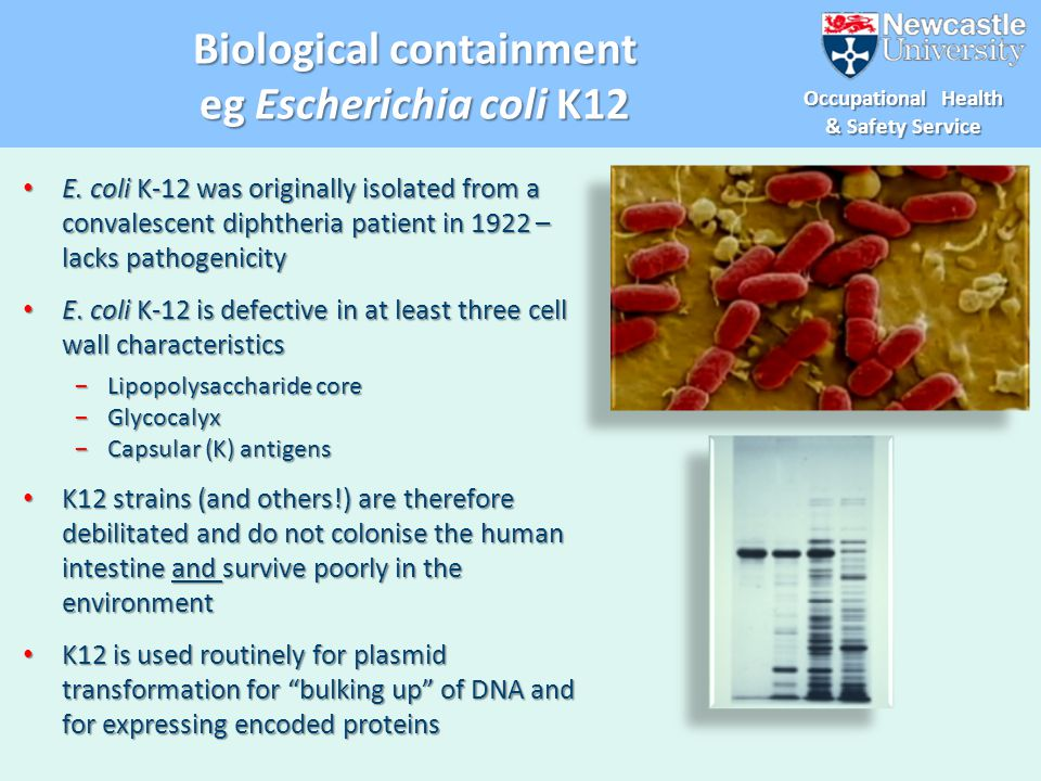 Biological containment eg Escherichia coli K12