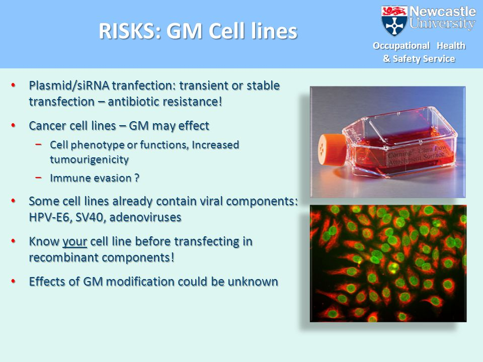 RISKS: GM Cell lines Plasmid/siRNA tranfection: transient or stable transfection – antibiotic resistance!