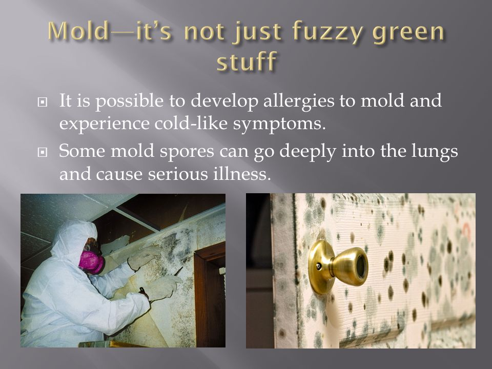 Mold—it's not just fuzzy green stuff