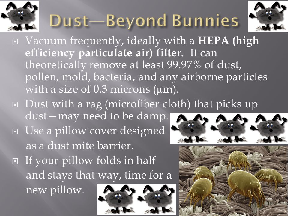 Dust—Beyond Bunnies