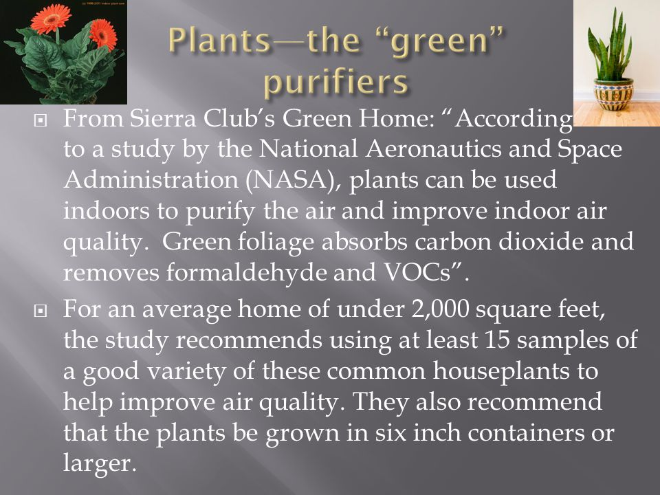 Plants—the green purifiers