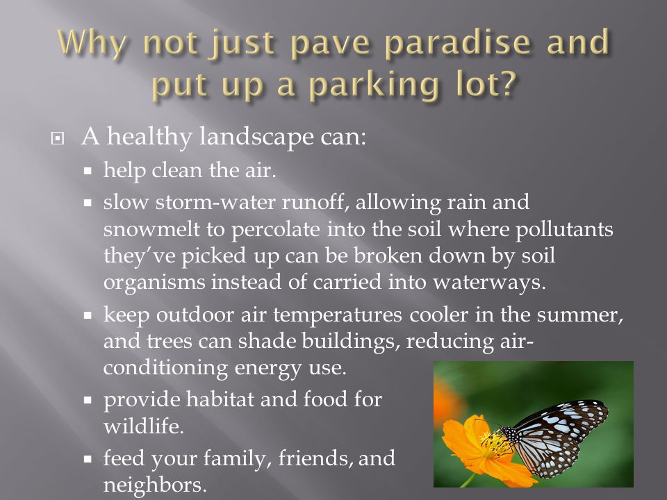 Why not just pave paradise and put up a parking lot