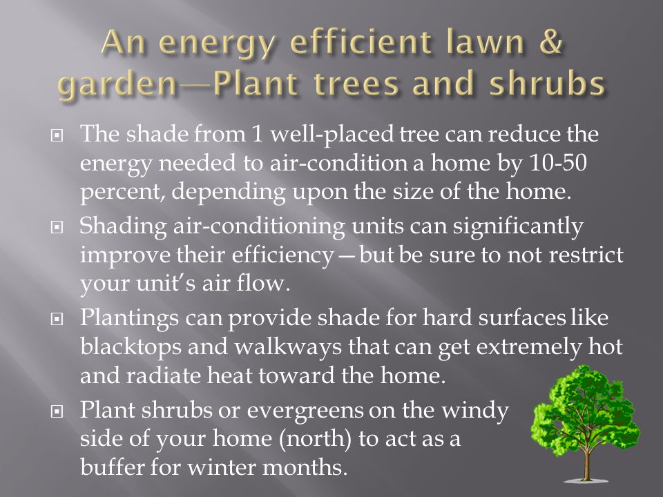 An energy efficient lawn & garden—Plant trees and shrubs